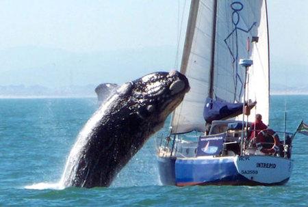 wwwhale_450x Eging: H εξέλιξη στο ψάρεμα του καλαμαριού και της σουπιάς με «γουρουνάκια»! | Ψάρεμα  - Συζητήσεις - Σκάφος