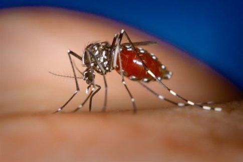 Πρόγραμμα ψεκασμών για τα κουνούπια στον Έβρο